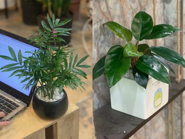 Mệnh Mộc nên để cây gì trên bàn làm việc